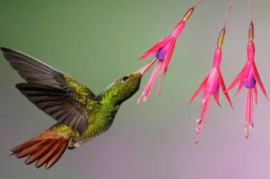 Hummingbirds Can See Colours We Can't Even Think about
